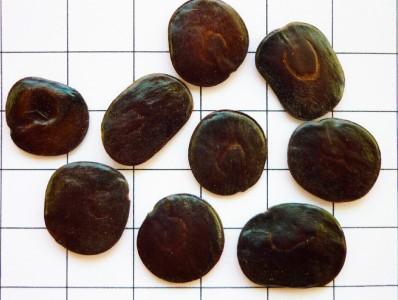 Fig. 2: Semillas de Curupay